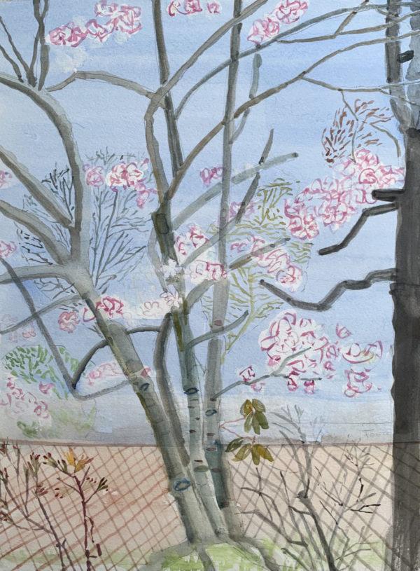 Watercolor painting - Magnolias